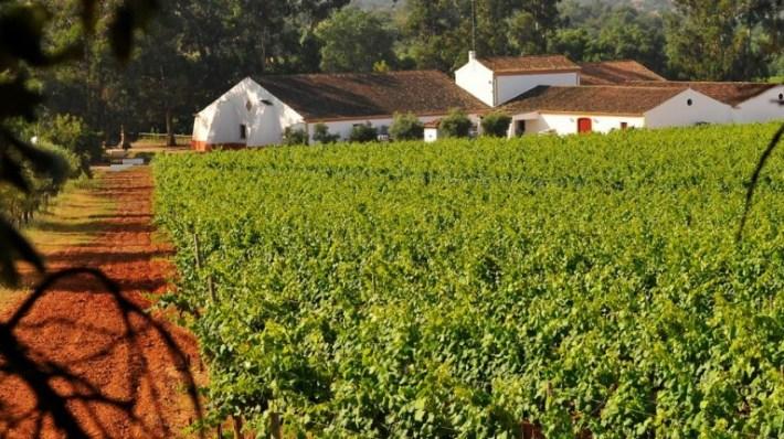 Portugal entre os 10 maiores países produtores de vinho 7