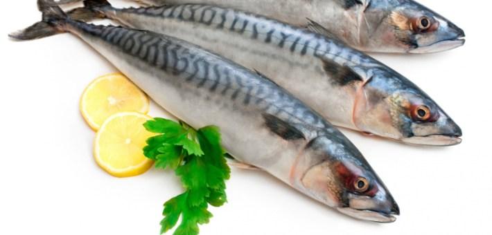 Cavala um peixe azul e baixo em colestrol3