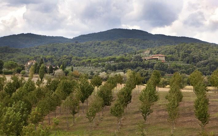 Sting produz vinho na Toscânia 6