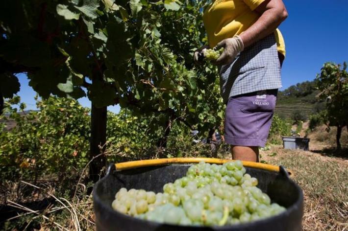 Os vinhos do Concelho de Murça 9