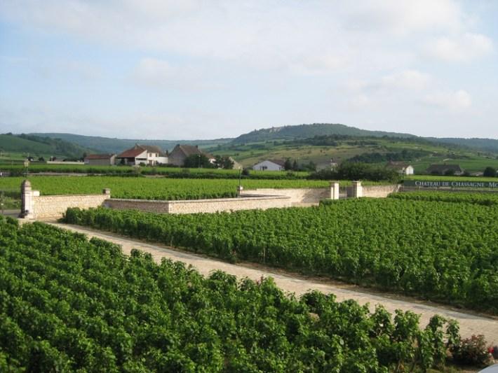 Perfumada e Delicada Casta Branca Chardonnay 9
