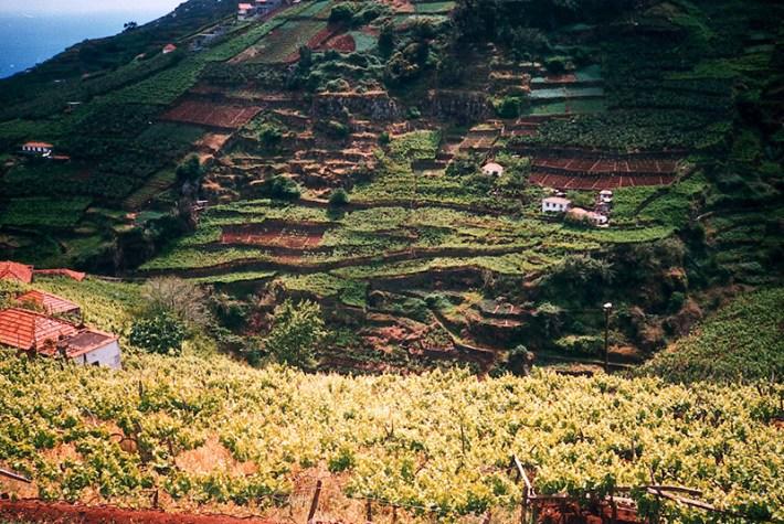 Região do Vinho da Madeira e como se produz 4