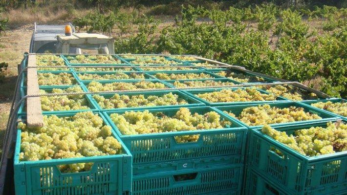Vinhos com Denominação de Origem Tejo da Sub Região de Almeirim 8