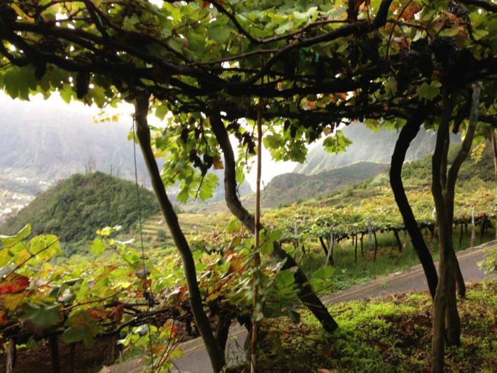 Região do Vinho da Madeira e como se produz 5
