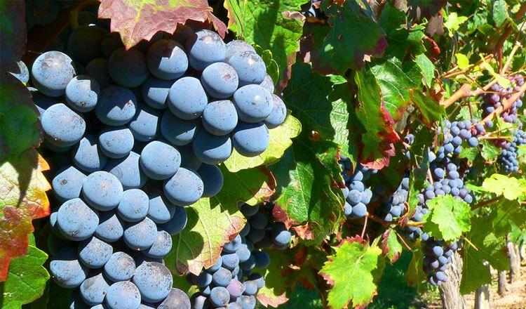 Vinhos DOC da Beira Interior e Sub Região da Cova da Beira