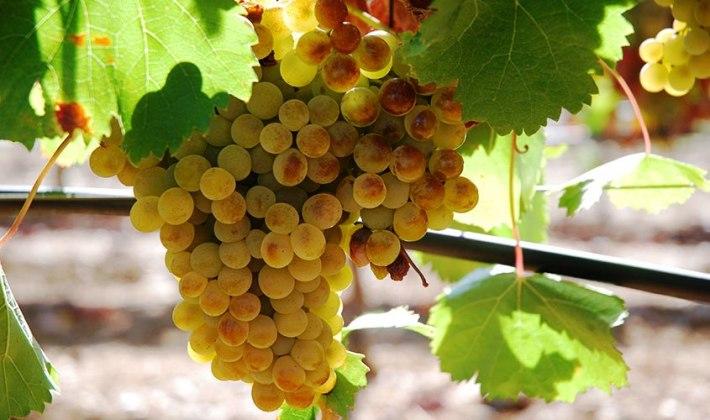 Vinhos da sub região de Borba com Denominação de Origem Alentejo 2
