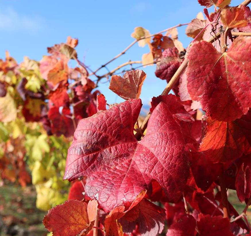 Beleza das folhas no Outono