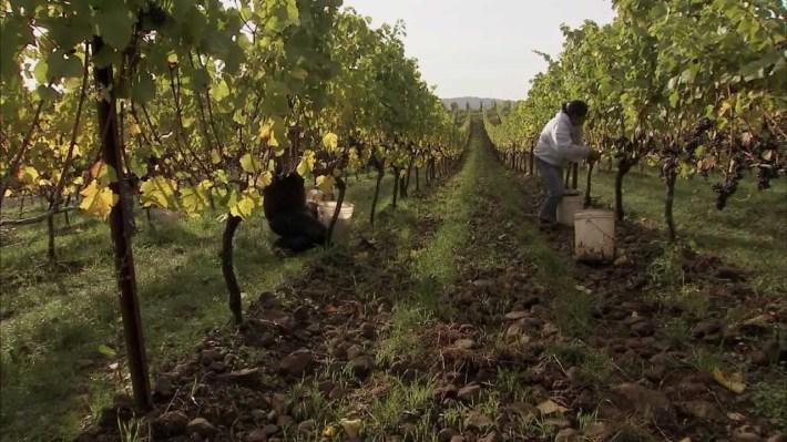 Agricultura biodinamica e a solucao
