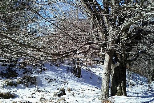 Sant Segimon-Matagalls-Collformic 4 - Diumenge, 22 de febrer de 2015
