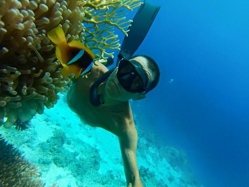 Immagine apneista con corallo di fuoco e pesce pagliaccio