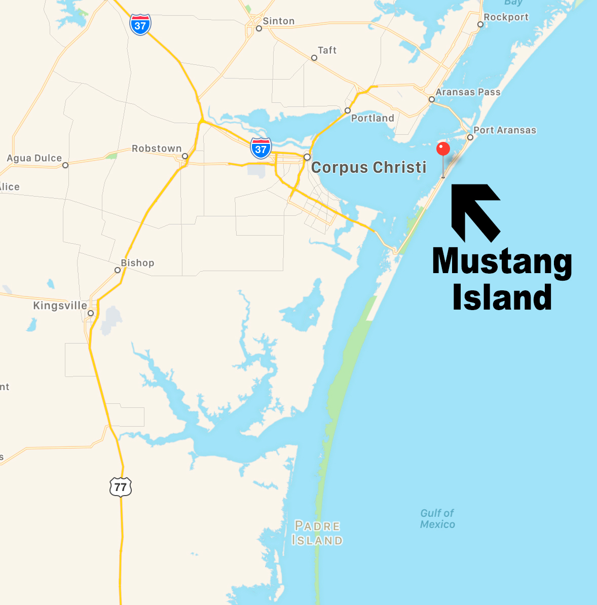 Mustang Island Beach: The Clueless Gent
