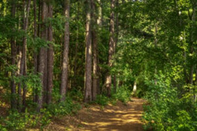 Image of narrow path through forest
