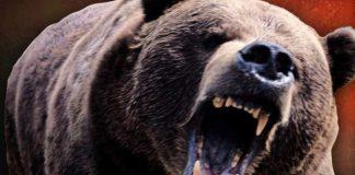 harghita femeie atacată de urs