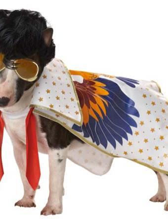 Elvis dog costume noting but a hound dog