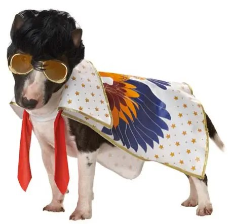 Elvis dog costume noting but a hound dog
