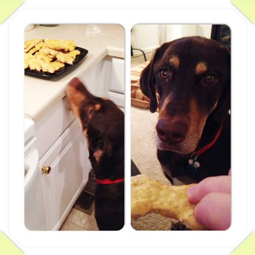 Dobby Dog APproved homemade peanut butter applesauce dog biscuits