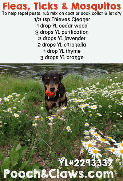 Young Living Essential Oils Recipe for Bug Repellant for Dogs.