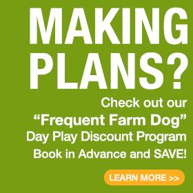 Frequent Farm Dog