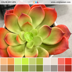 Colorful Succulent - Color Inspiration from Color My Life