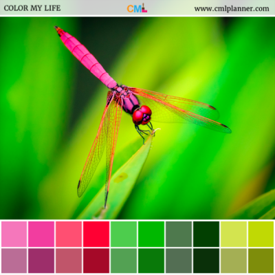 Neon Dragonfly - Color Inspiration from Color My Life
