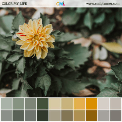 Yellow Flower - Color Inspiration from Color My Life