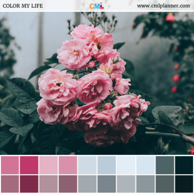 Pretty In Pink - Color Inspiration from Color My Life