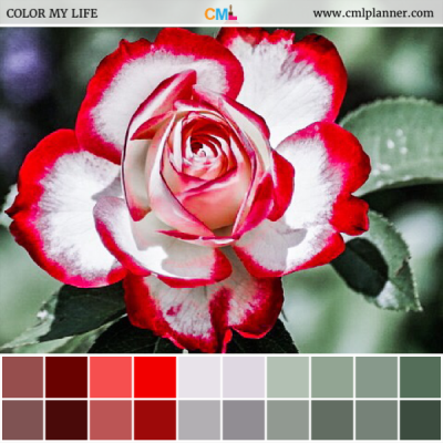 Rose Tips - Color Inspiration from Color My Life