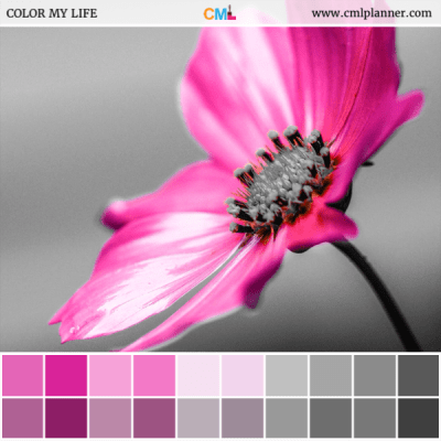 Splash of Pink - Color Inspiration from Color My Life