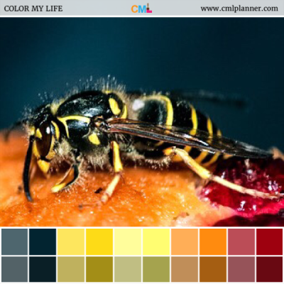 Hidden Danger - Color Inspiration from Color My Life