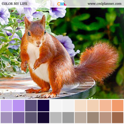 Squirrel Power - Color Inspiration from Color My Life
