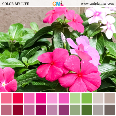Floral Hues - Color Inspiration from Color My Life
