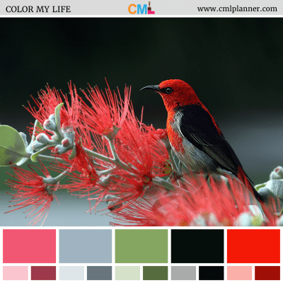 Scarlet Honeyeater - Color Inspiration from Color My Life