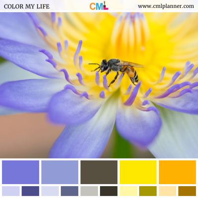 Lotus Hues - Color Inspiration from Color My Life