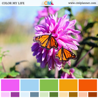 Butterfly Flowers - Color Inspiration from Color My Life