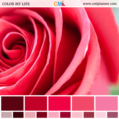 Rosy Blush - Color Inspiration from Color My Life