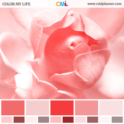 Color Palette #071618 - Color Inspiration from Color My Life