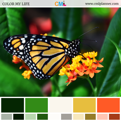 Color Palette #072218 - Color Inspiration from Color My Life