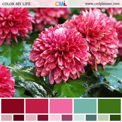 Color Palette #101618 - Color Inspiration from Color My Life