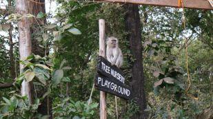 MonkeysinLilongwe