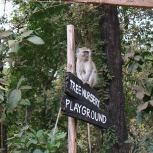 MonkeysinLilongwe