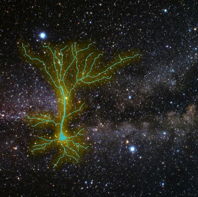 Star Trek Neuron
