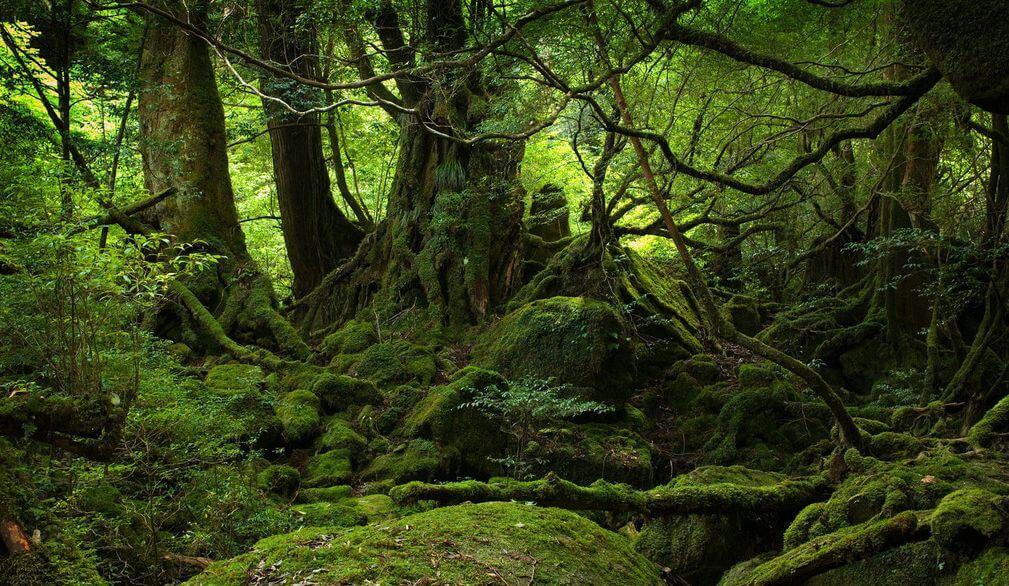 大自然的能量平衡 - 全息生态系列(二)