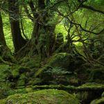全息与农法的联系 – 全息生态系列分享