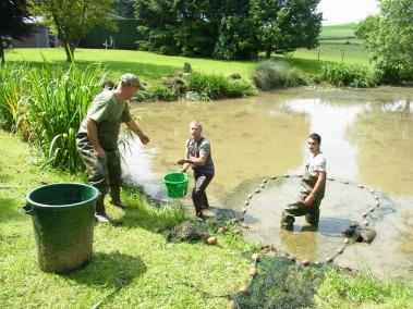 ökologische Teichwirtschaft