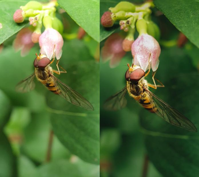 macro-before-after