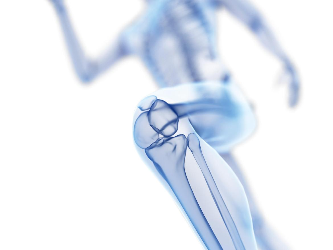 A scientific illustration of the knee joint while running