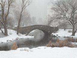 Janvier 2015 : un hiver dans Central Park
