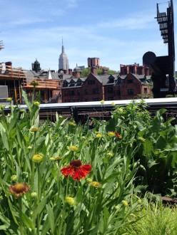 L'Empire State building dans les fleurs ! (Photo Virginie Jacques)