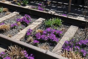 Fleurs sauvages sur la High Line. (Photo Daniel Beyly)