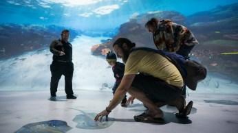 Ocean Odissey de National Geographic